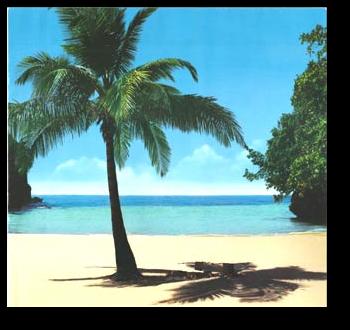 """L'immagine """"http://adoldo.files.wordpress.com/2007/07/palma.png"""" non può essere visualizzata poiché contiene degli errori."""